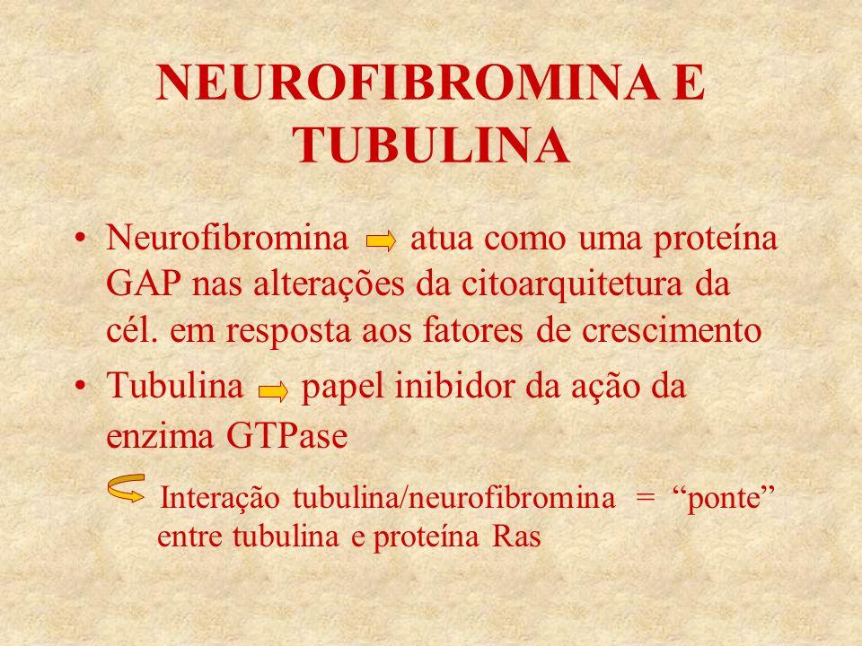 NEUROFIBROMINA E TUBULINA Neurofibromina atua como uma proteína GAP nas alterações da citoarquitetura da cél.
