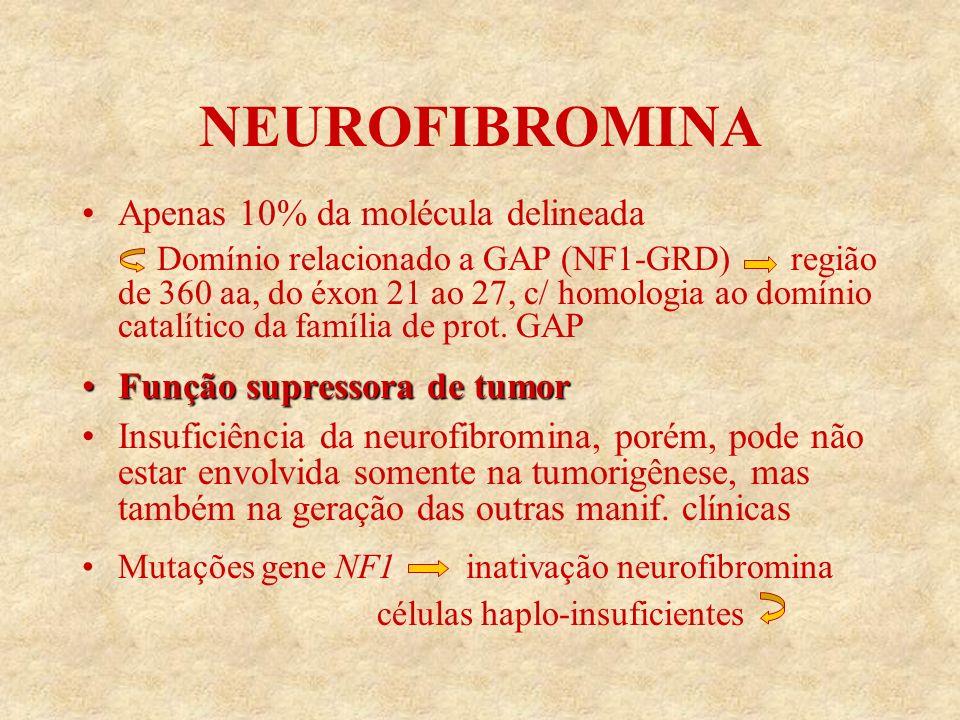NEUROFIBROMINA Apenas 10% da molécula delineada Domínio relacionado a GAP (NF1-GRD) região de 360 aa, do éxon 21 ao 27, c/ homologia ao domínio catalítico da família de prot.