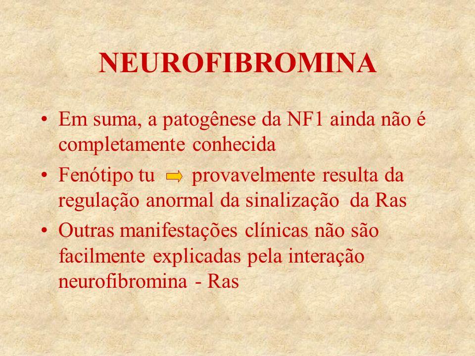 NEUROFIBROMINA Em suma, a patogênese da NF1 ainda não é completamente conhecida Fenótipo tu provavelmente resulta da regulação anormal da sinalização da Ras Outras manifestações clínicas não são facilmente explicadas pela interação neurofibromina - Ras