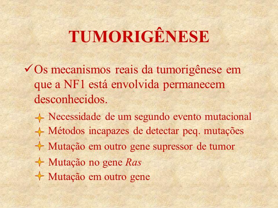 TUMORIGÊNESE Os mecanismos reais da tumorigênese em que a NF1 está envolvida permanecem desconhecidos.