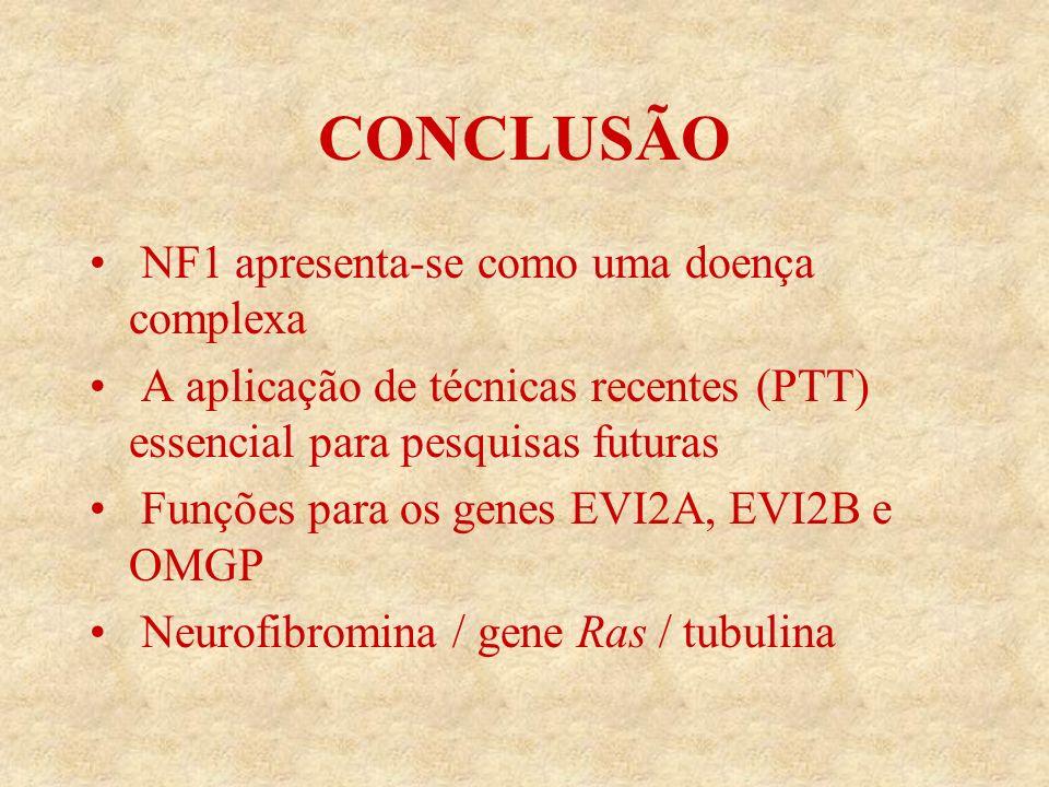 CONCLUSÃO NF1 apresenta-se como uma doença complexa A aplicação de técnicas recentes (PTT) essencial para pesquisas futuras Funções para os genes EVI2A, EVI2B e OMGP Neurofibromina / gene Ras / tubulina