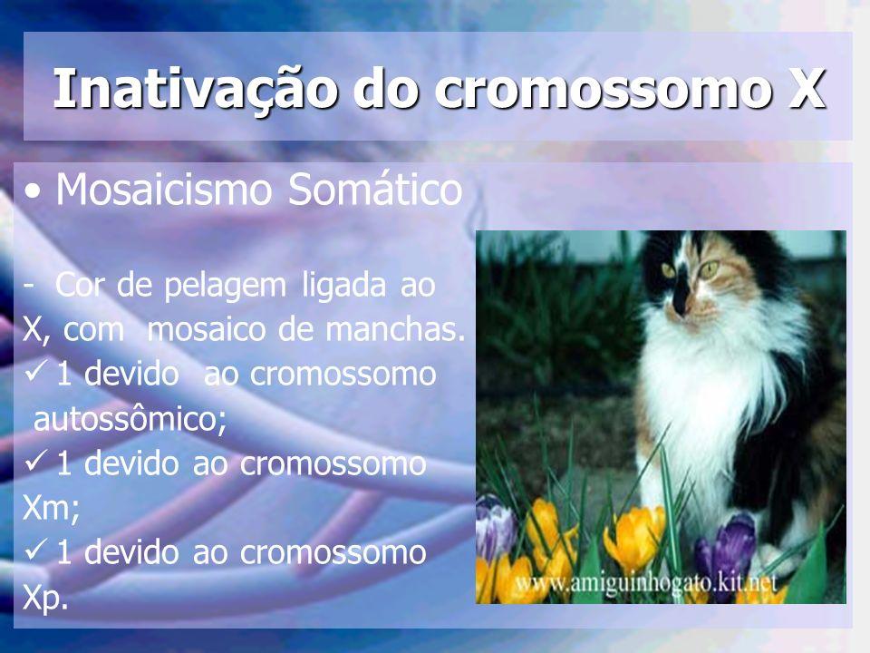 Inativação do cromossomo X Mosaicismo Somático -Cor de pelagem ligada ao X, com mosaico de manchas. 1 devido ao cromossomo autossômico; 1 devido ao cr
