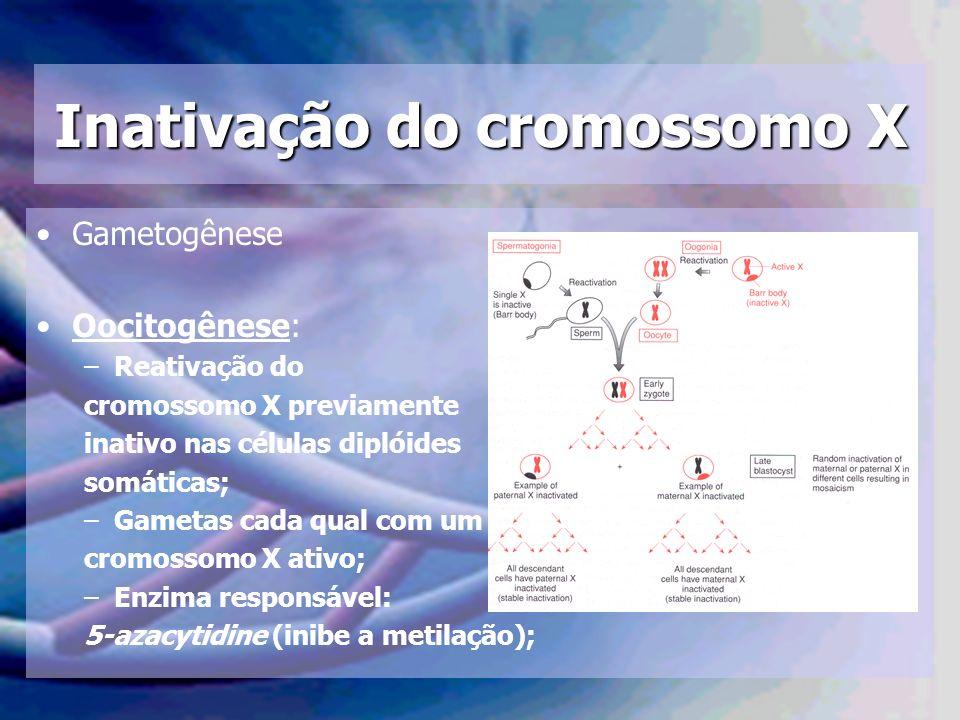 Inativação do cromossomo X Gametogênese Oocitogênese: –Reativação do cromossomo X previamente inativo nas células diplóides somáticas; –Gametas cada q