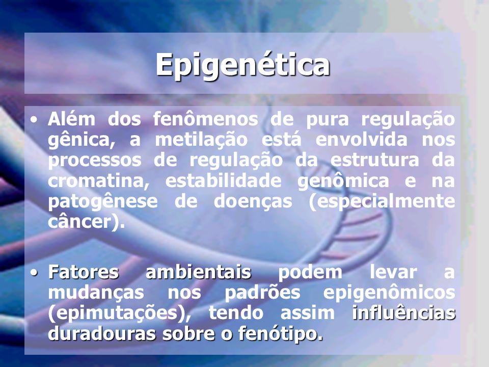 Epigenética Além dos fenômenos de pura regulação gênica, a metilação está envolvida nos processos de regulação da estrutura da cromatina, estabilidade