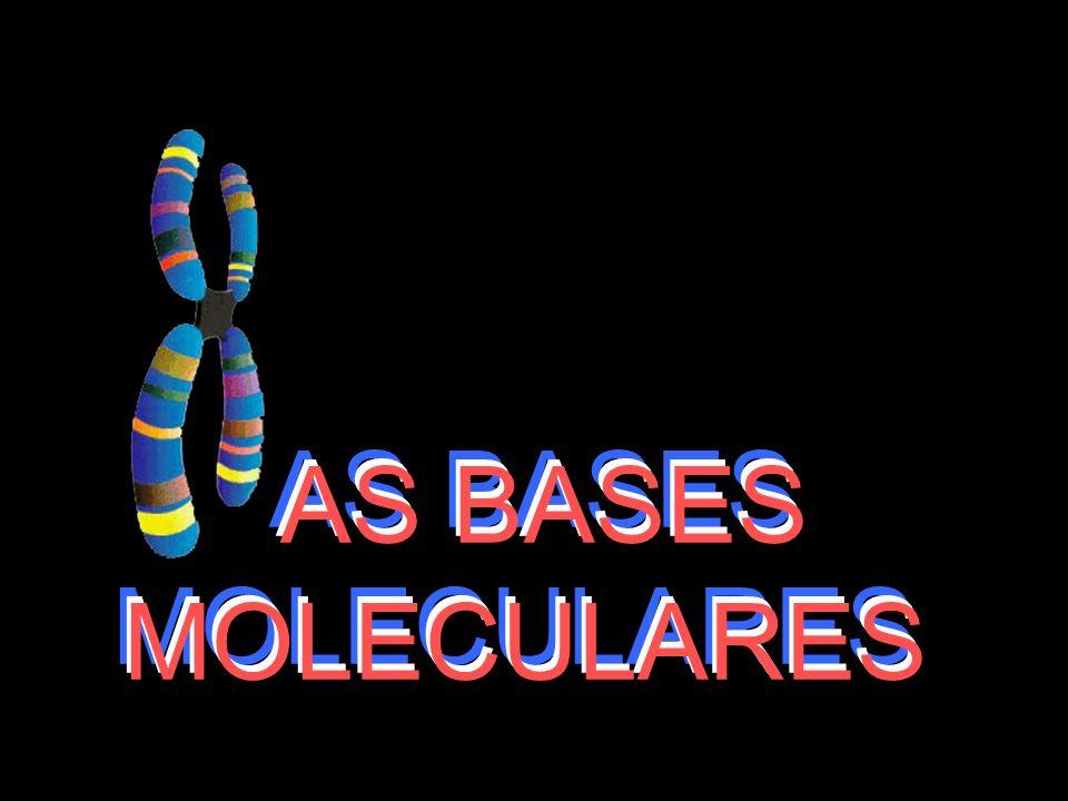 AS BASES MOLECULARES