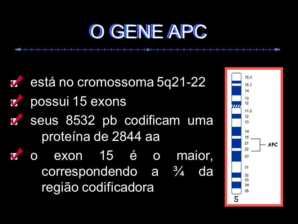 está no cromossoma 5q21-22 possui 15 exons seus 8532 pb codificam uma proteína de 2844 aa o exon 15 é o maior, correspondendo a ¾ da região codificado
