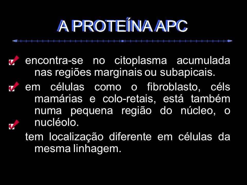 encontra-se no citoplasma acumulada nas regiões marginais ou subapicais. em células como o fibroblasto, céls mamárias e colo-retais, está também numa
