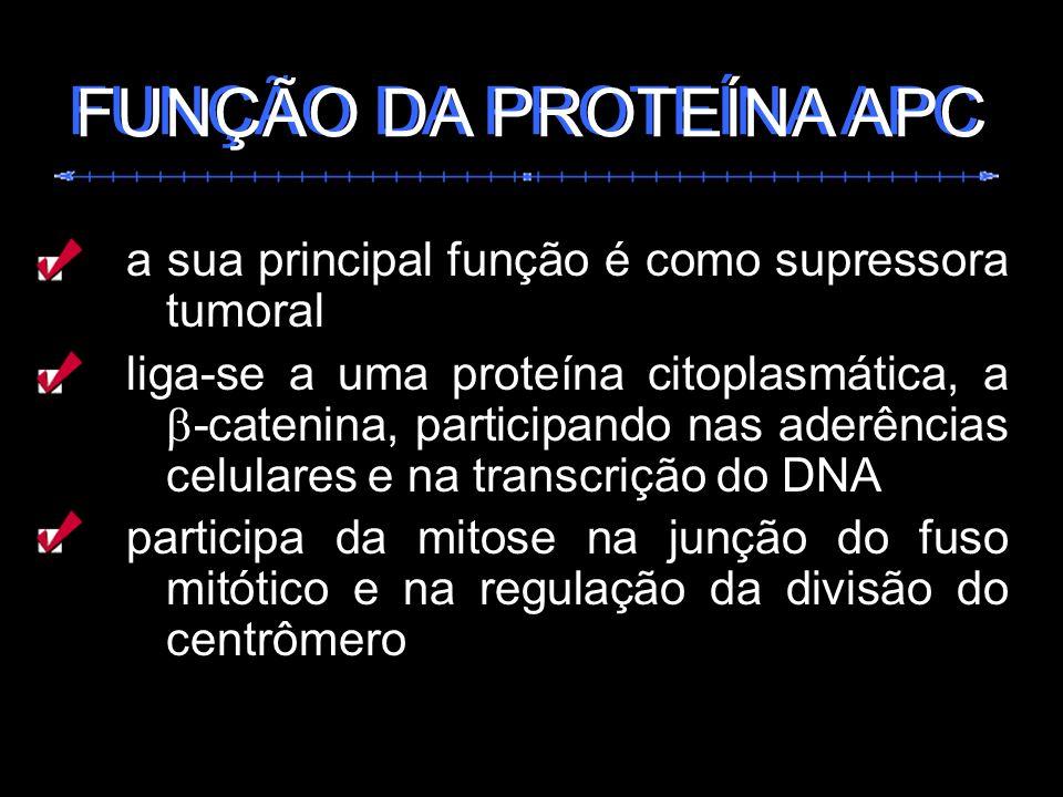 a sua principal função é como supressora tumoral liga-se a uma proteína citoplasmática, a -catenina, participando nas aderências celulares e na transc
