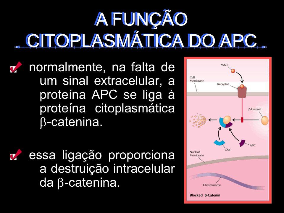 normalmente, na falta de um sinal extracelular, a proteína APC se liga à proteína citoplasmática -catenina. essa ligação proporciona a destruição intr