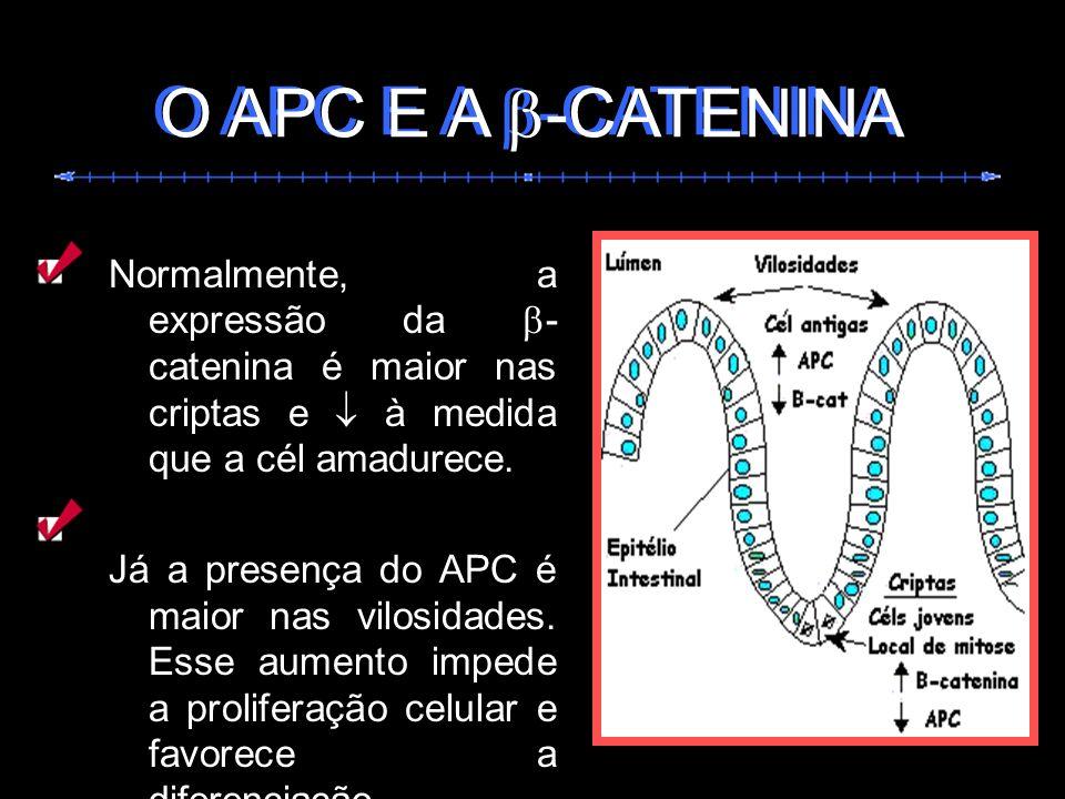 Normalmente, a expressão da - catenina é maior nas criptas e à medida que a cél amadurece. Já a presença do APC é maior nas vilosidades. Esse aumento