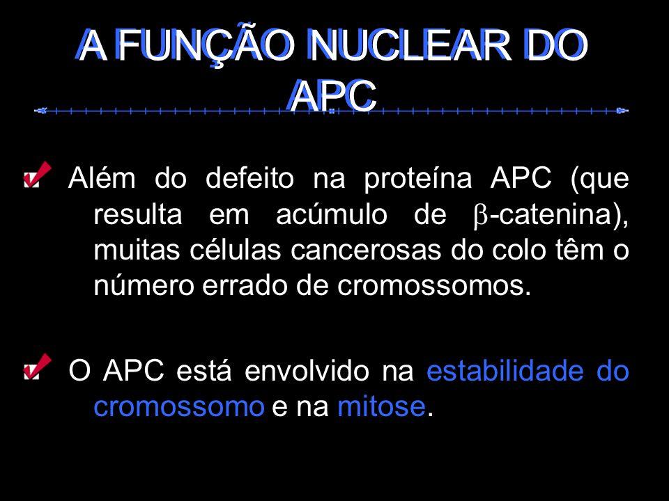 Além do defeito na proteína APC (que resulta em acúmulo de -catenina), muitas células cancerosas do colo têm o número errado de cromossomos. O APC est