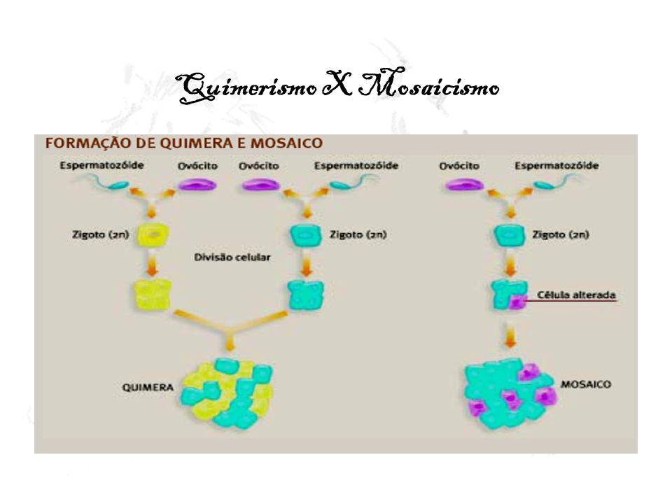Quimerismo X Mosaicismo