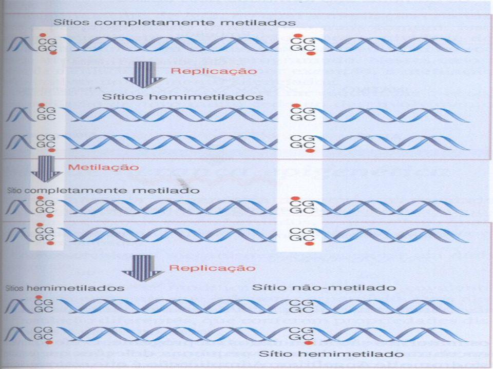 Síndrome de Prader-Willi Clínica: obesidade, mãos e pés pequenos, baixa estatura, hipogonadismo, retardo mental 70% deleção em 15q11-q13 do cromossomo paterno INFORMAÇÃO GÊNICA SOMENTE DA MÃE!
