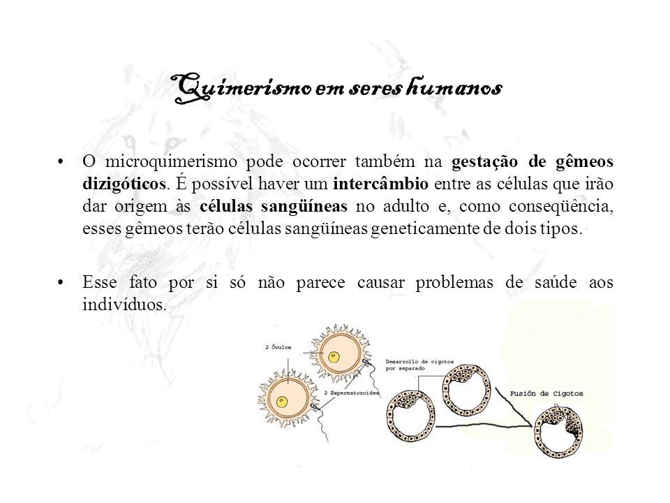 Quimerismo em seres humanos O microquimerismo pode ocorrer também na gestação de gêmeos dizigóticos. É possível haver um intercâmbio entre as células