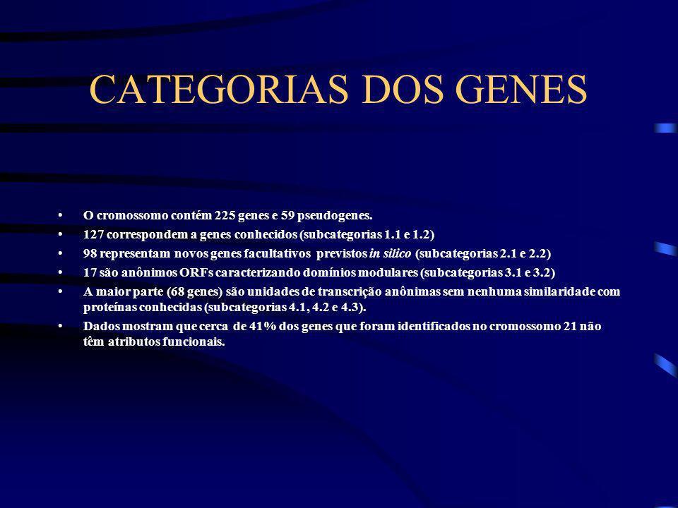 CATÁLAGO GENÔMICO A geografia do cromossomo foi feita através de mapeamento e seqüenciamento resultando em um catálogo genômico. O catálogo dos genes