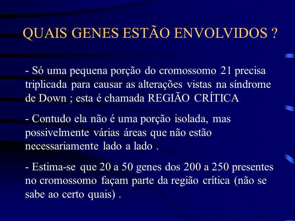 SÍNDROME DE DOWN Resultado da presença de três cópias do cromossomo 21 ao invés de duas. Dados colhidos de ratos transgênicos indicam que apenas um su