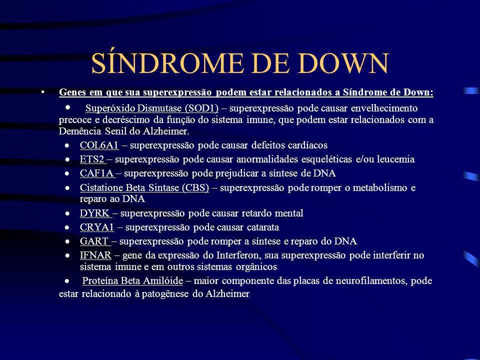 QUAIS GENES ESTÃO ENVOLVIDOS ? - Só uma pequena porção do cromossomo 21 precisa triplicada para causar as alterações vistas na síndrome de Down ; esta
