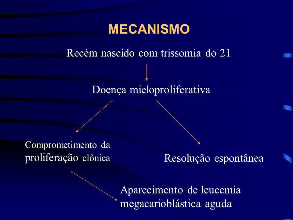 MECANISMOS PROPOSTOS 50% das crianças com síndrome de Down apresenta uma patologia mieloproliferativa transitória Há comprometimento da proliferação c