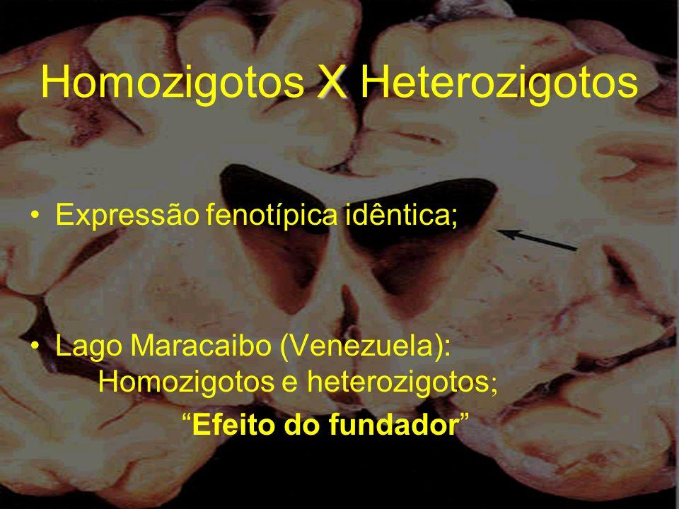 X Homozigotos X Heterozigotos Expressão fenotípica idêntica; Lago Maracaibo (Venezuela): Homozigotos e heterozigotos ; Efeito do fundador