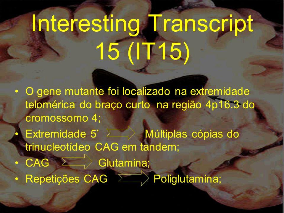 Interesting Transcript 15 (IT15) O gene mutante foi localizado na extremidade telomérica do braço curto na região 4p16.3 do cromossomo 4; Extremidade