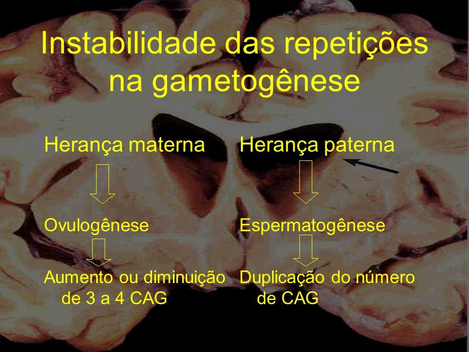 Instabilidade das repetições na gametogênese Herança materna Ovulogênese Aumento ou diminuição de 3 a 4 CAG Herança paterna Espermatogênese Duplicação