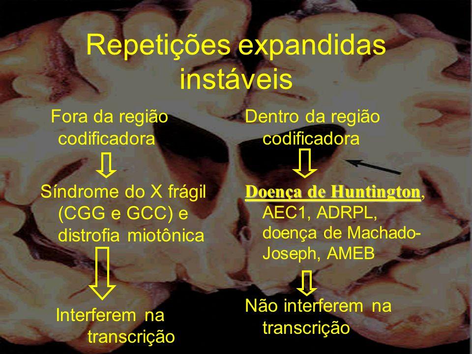 Repetições expandidas instáveis Fora da região codificadora Síndrome do X frágil (CGG e GCC) e distrofia miotônica Interferem na transcrição Dentro da