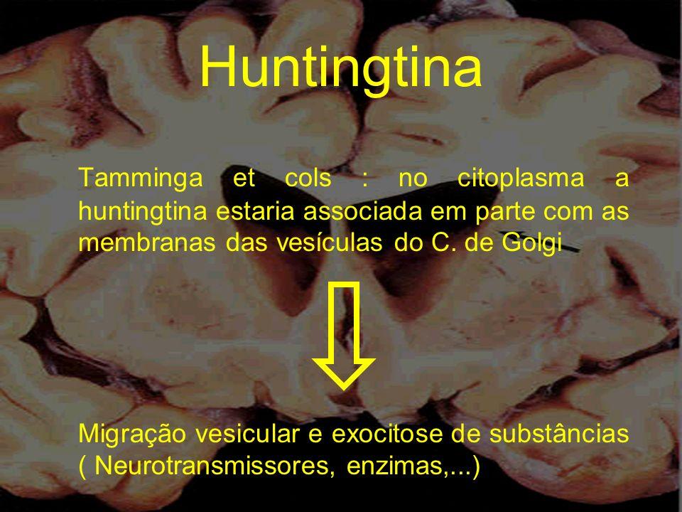 Huntingtina Tamminga et cols : no citoplasma a huntingtina estaria associada em parte com as membranas das vesículas do C. de Golgi Migração vesicular