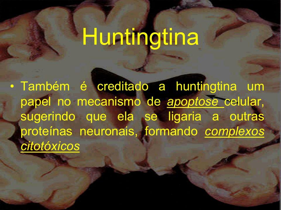 Huntingtina Também é creditado a huntingtina um papel no mecanismo de apoptose celular, sugerindo que ela se ligaria a outras proteínas neuronais, for