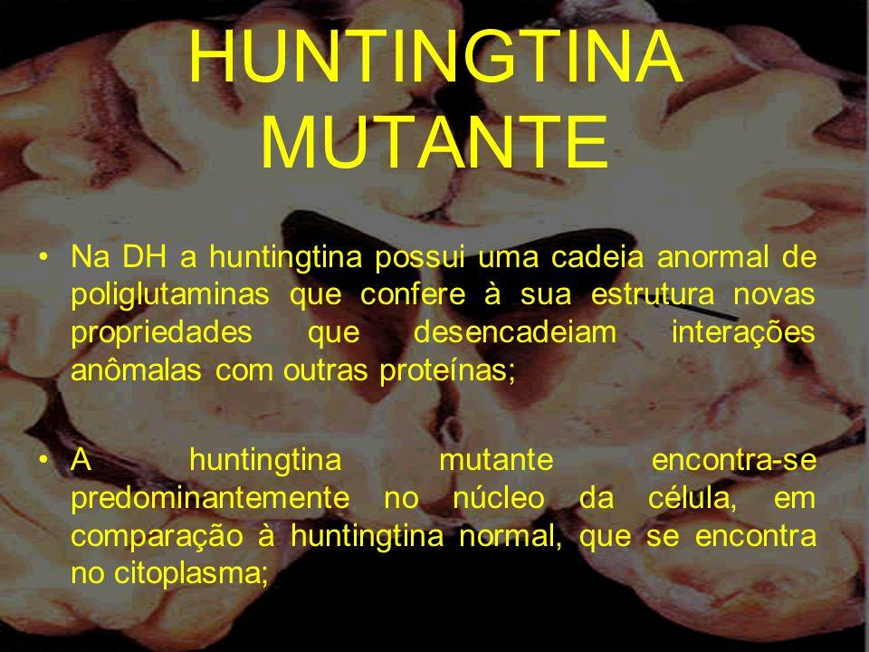 HUNTINGTINA MUTANTE Na DH a huntingtina possui uma cadeia anormal de poliglutaminas que confere à sua estrutura novas propriedades que desencadeiam in
