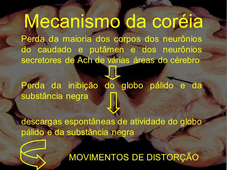 Mecanismo da coréia Perda da maioria dos corpos dos neurônios do caudado e putâmen e dos neurônios secretores de Ach de várias áreas do cérebro Perda