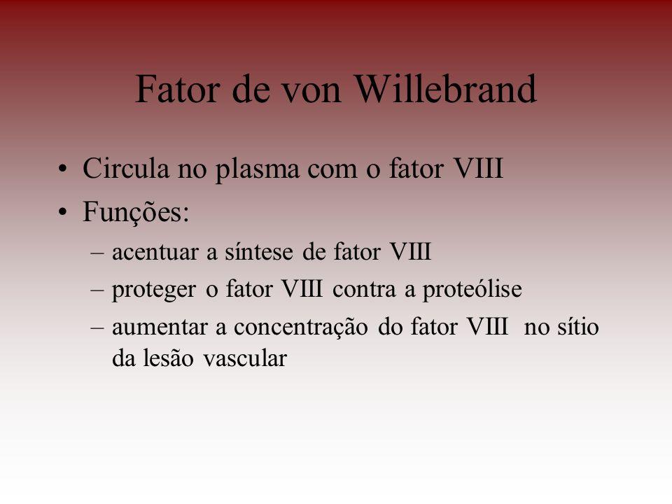 Fator de von Willebrand Circula no plasma com o fator VIII Funções: –acentuar a síntese de fator VIII –proteger o fator VIII contra a proteólise –aume