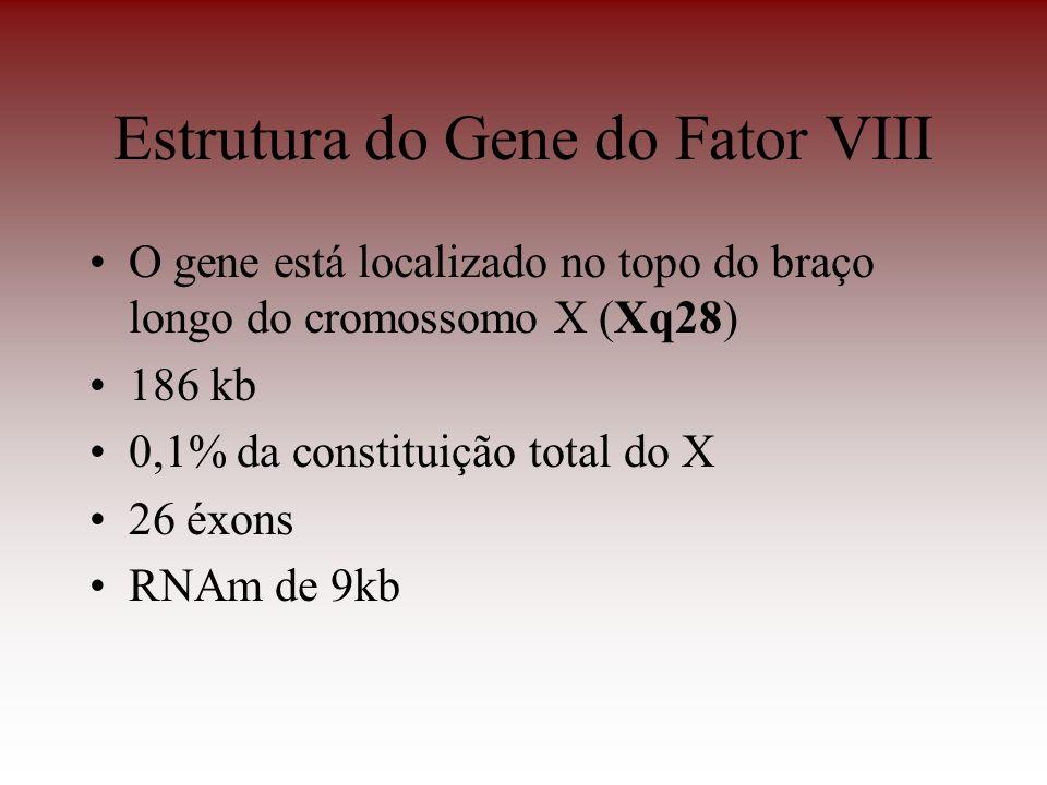 O gene está localizado no topo do braço longo do cromossomo X (Xq28) 186 kb 0,1% da constituição total do X 26 éxons RNAm de 9kb