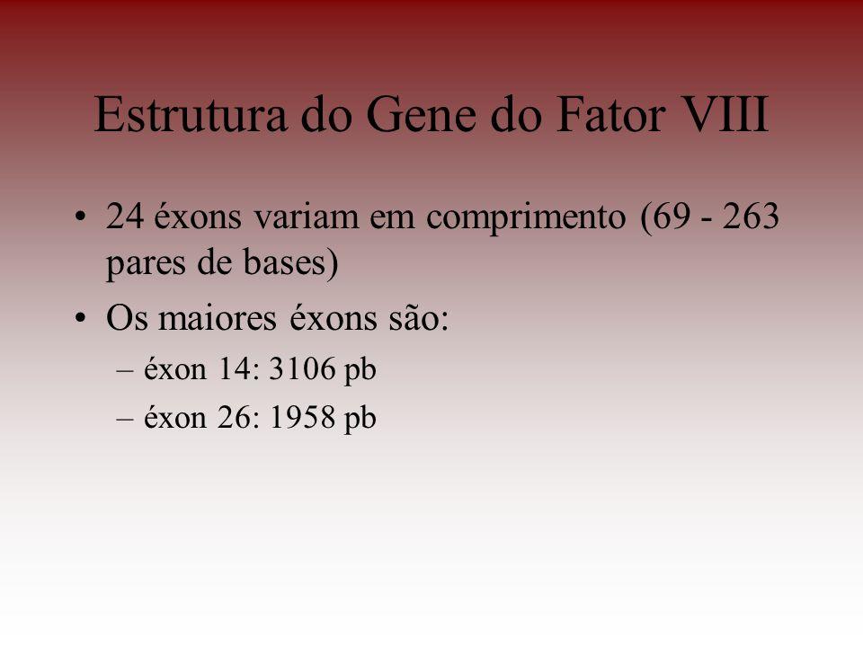Estrutura do Gene do Fator VIII 24 éxons variam em comprimento (69 - 263 pares de bases) Os maiores éxons são: –éxon 14: 3106 pb –éxon 26: 1958 pb