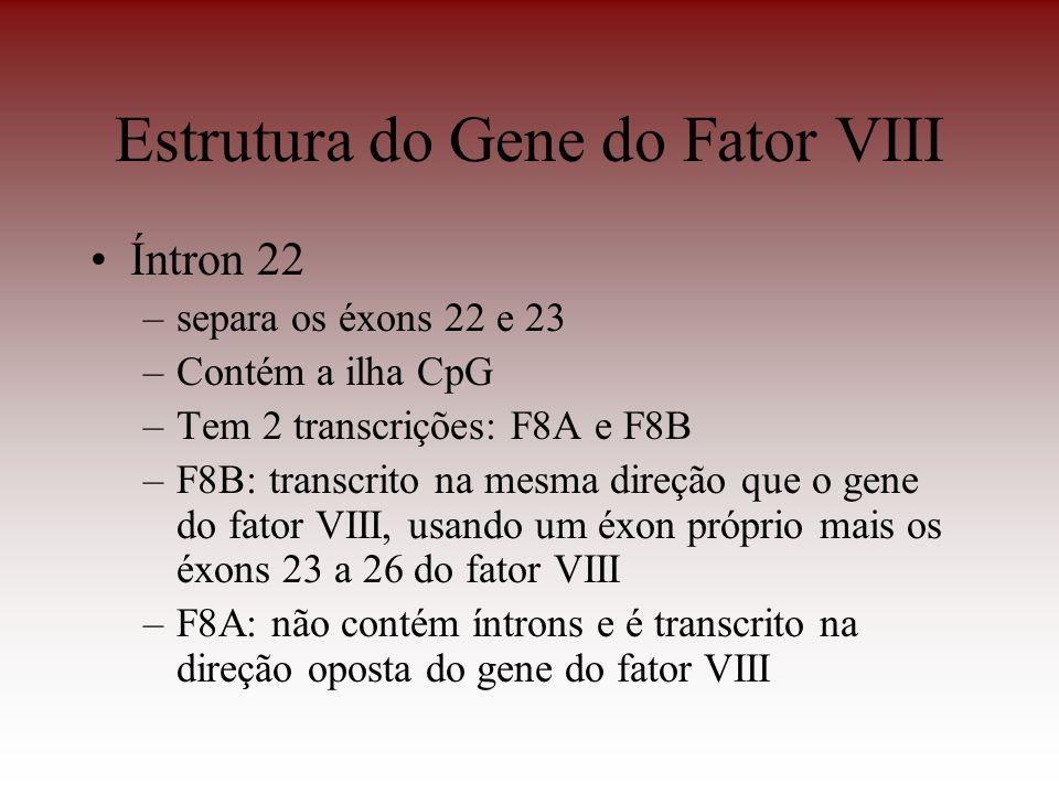 Estrutura do Gene do Fator VIII Íntron 22 –separa os éxons 22 e 23 –Contém a ilha CpG –Tem 2 transcrições: F8A e F8B –F8B: transcrito na mesma direção