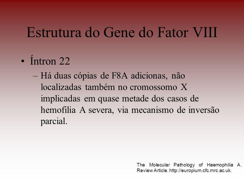Estrutura do Gene do Fator VIII Íntron 22 –Há duas cópias de F8A adicionas, não localizadas também no cromossomo X implicadas em quase metade dos caso