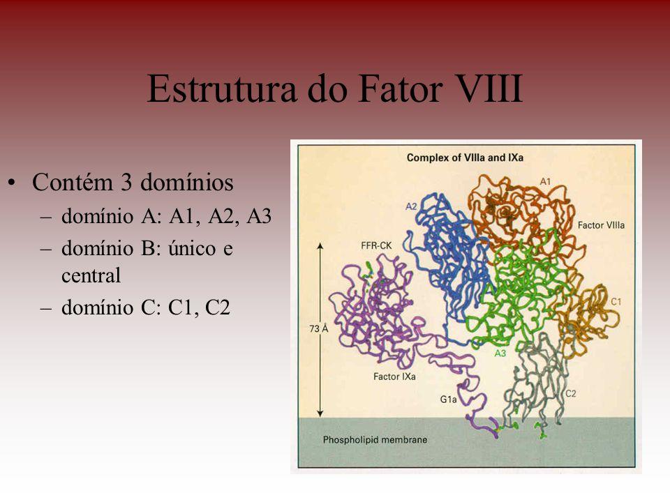 Estrutura do Fator VIII Contém 3 domínios –domínio A: A1, A2, A3 –domínio B: único e central –domínio C: C1, C2