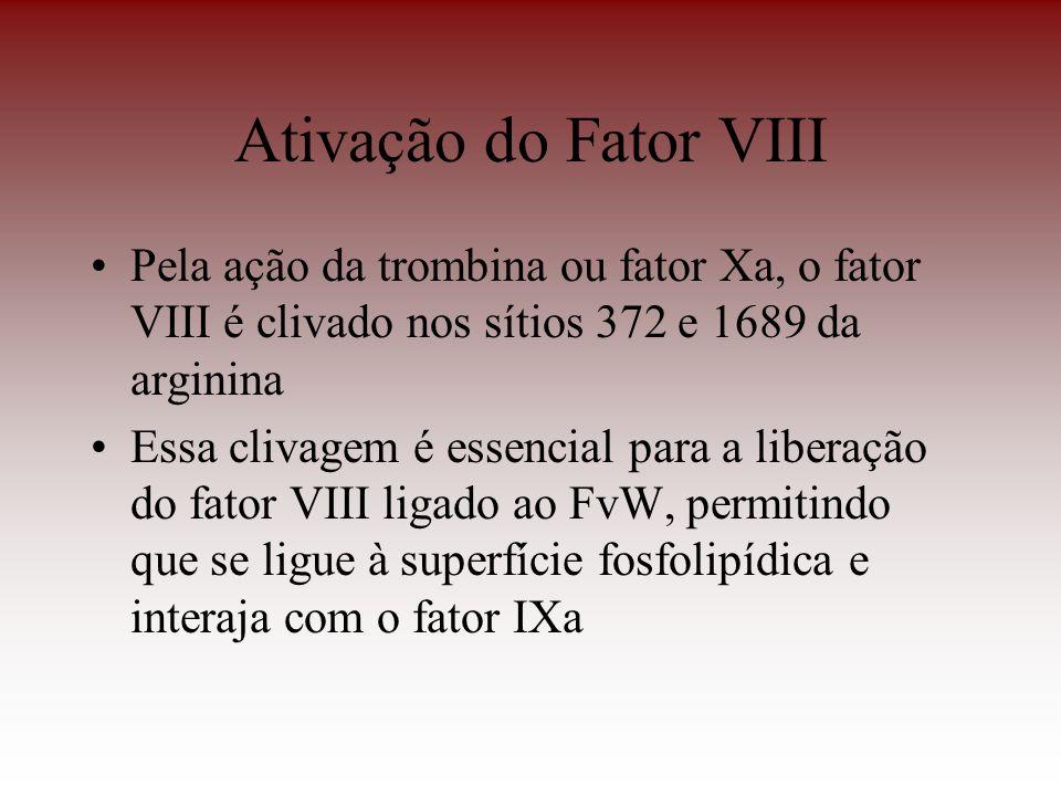 Ativação do Fator VIII Pela ação da trombina ou fator Xa, o fator VIII é clivado nos sítios 372 e 1689 da arginina Essa clivagem é essencial para a li