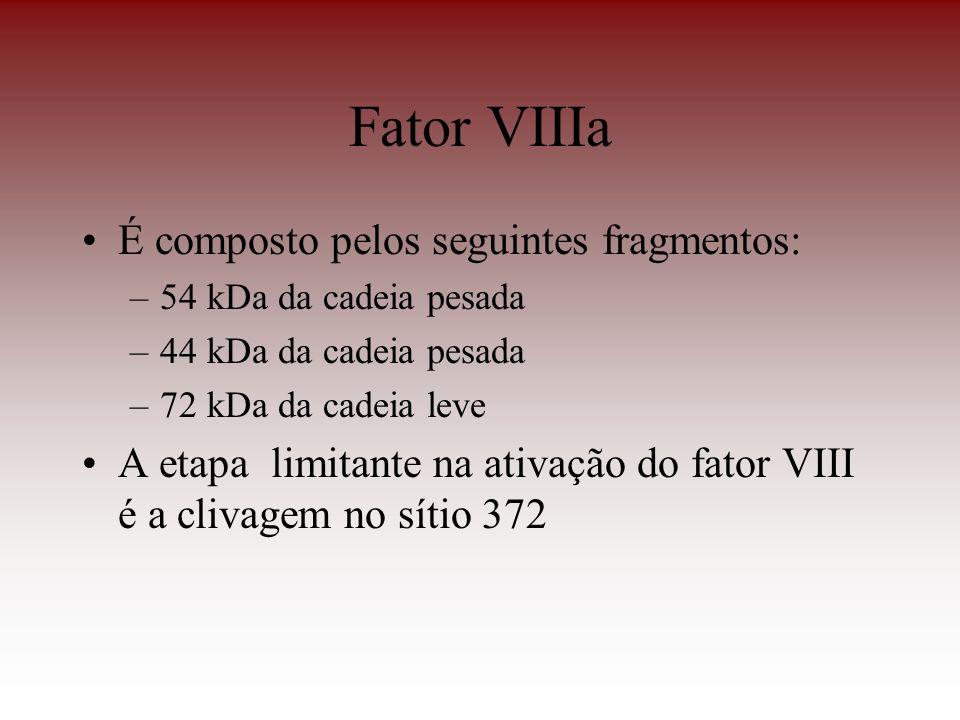 Fator VIIIa É composto pelos seguintes fragmentos: –54 kDa da cadeia pesada –44 kDa da cadeia pesada –72 kDa da cadeia leve A etapa limitante na ativa
