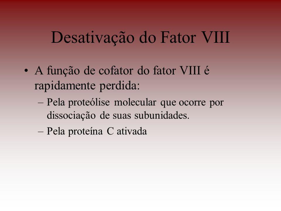 Desativação do Fator VIII A função de cofator do fator VIII é rapidamente perdida: –Pela proteólise molecular que ocorre por dissociação de suas subun