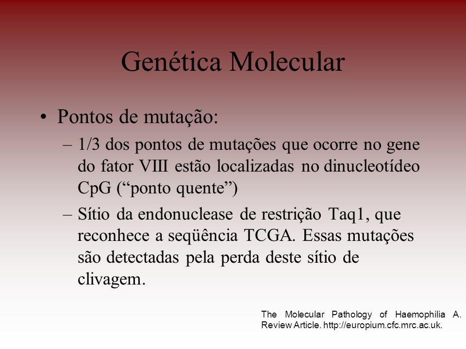 Pontos de mutação: –1/3 dos pontos de mutações que ocorre no gene do fator VIII estão localizadas no dinucleotídeo CpG (ponto quente) –Sítio da endonu