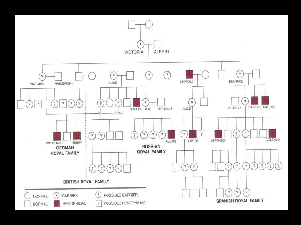 Substituição de única base Missense: fenótipos variados Nonsense: levam a hemofilia A severa, por formar uma molécula de fator VIII truncado