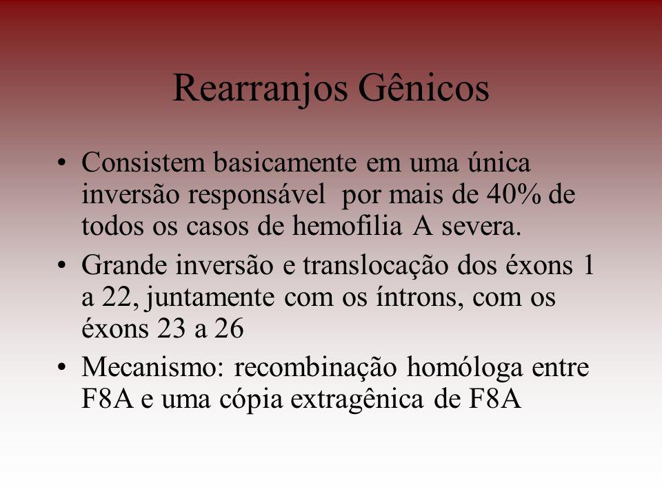 Rearranjos Gênicos Consistem basicamente em uma única inversão responsável por mais de 40% de todos os casos de hemofilia A severa. Grande inversão e