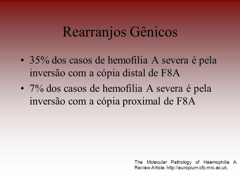 Rearranjos Gênicos 35% dos casos de hemofilia A severa é pela inversão com a cópia distal de F8A 7% dos casos de hemofilia A severa é pela inversão co