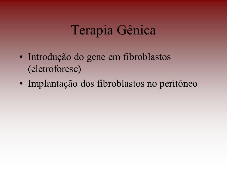 Terapia Gênica Introdução do gene em fibroblastos (eletroforese) Implantação dos fibroblastos no peritôneo