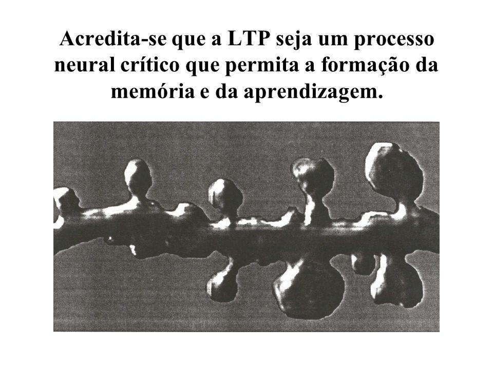 Acredita-se que a LTP seja um processo neural crítico que permita a formação da memória e da aprendizagem.