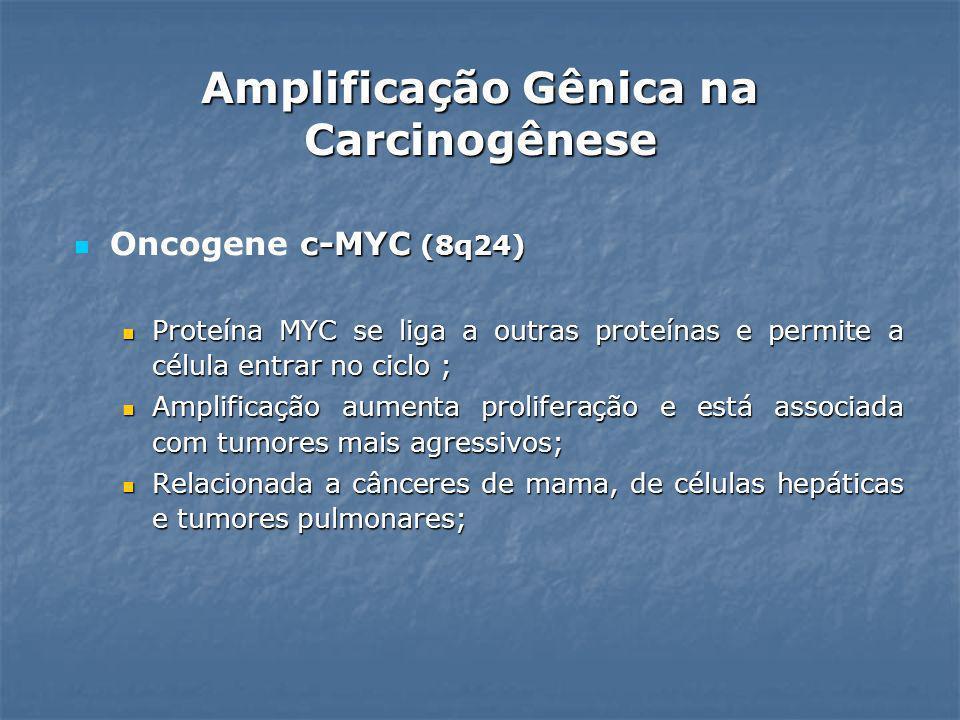 c-MYC (8q24) Oncogene c-MYC (8q24) Proteína MYC se liga a outras proteínas e permite a célula entrar no ciclo ; Proteína MYC se liga a outras proteína