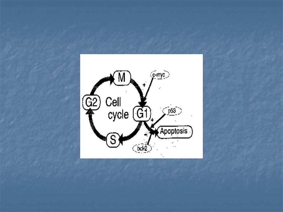 Outros exemplos de co-amplificação e tumores: Outros exemplos de co-amplificação e tumores: MDM2 e CDK4 (12q14-15) MDM2 e CDK4 (12q14-15) CCND, INT-2, EMS1 e HST-1: freqüentemente amplificados em carcinomas de mama, bexiga,cabeça e pescoço, pulmão e esôfago.