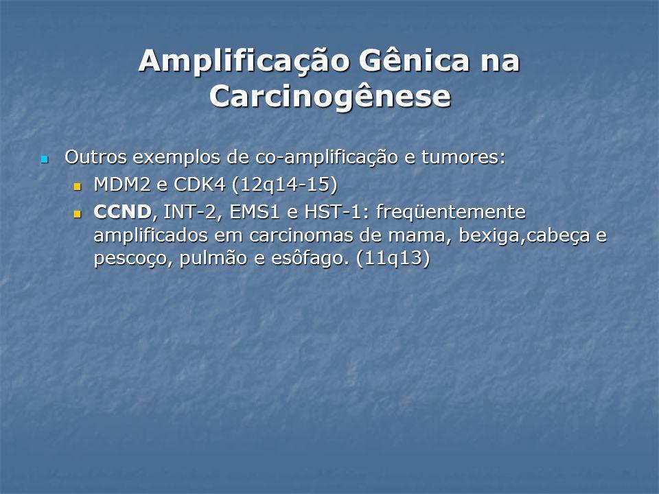 CCND1 (gene da ciclina D1) CCND1 (gene da ciclina D1) Amplificação ocorre no início dos tumores e persiste nas fases avançadas Amplificação ocorre no início dos tumores e persiste nas fases avançadas Difícil prognóstico, invasão local, metástases em linfonodos e aumento de recorrência e, em alguns casos, redução do tempo de vida e resistência a quimioterapia Difícil prognóstico, invasão local, metástases em linfonodos e aumento de recorrência e, em alguns casos, redução do tempo de vida e resistência a quimioterapia Expressão aumentada – células neoplásicas; Expressão aumentada – células neoplásicas; Regula a transição de G1 a S no ciclo celular formando complexos com cdk; Regula a transição de G1 a S no ciclo celular formando complexos com cdk; Amplificação gene D1 - adenocarcinoma de mama, carcinomas de células escamosas, esôfago, bexiga Amplificação gene D1 - adenocarcinoma de mama, carcinomas de células escamosas, esôfago, bexiga Amplificação Gênica na Carcinogênese