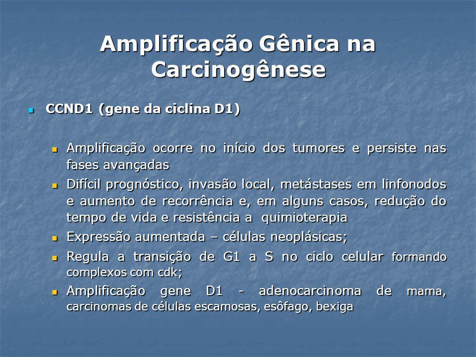 CCND1 (gene da ciclina D1) CCND1 (gene da ciclina D1) Amplificação ocorre no início dos tumores e persiste nas fases avançadas Amplificação ocorre no