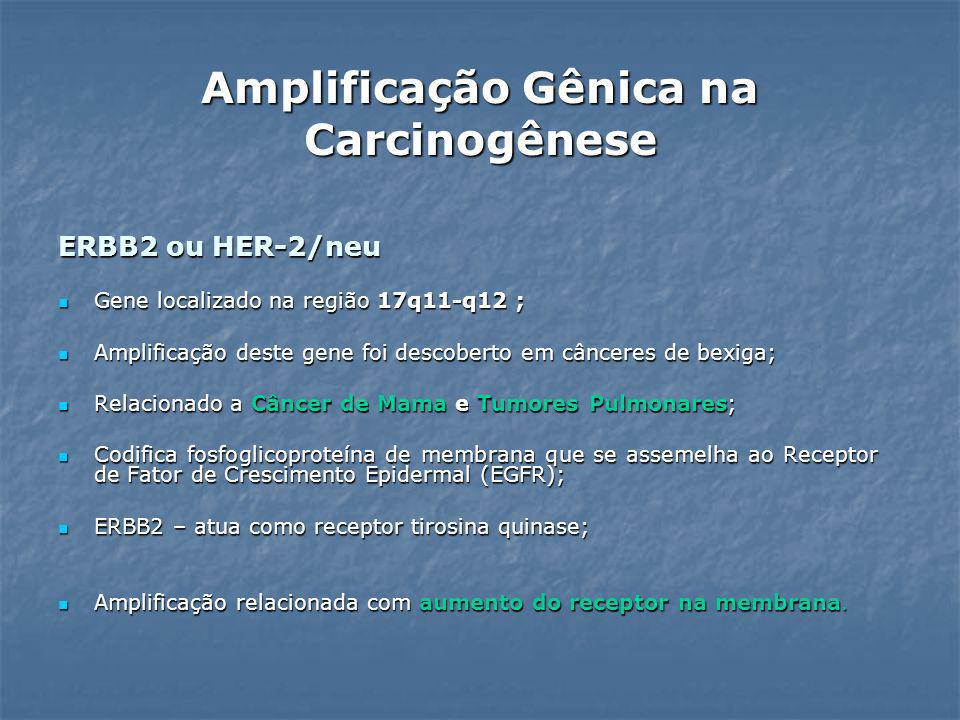 ERBB2 ou HER-2/neu Gene localizado na região 17q11-q12 ; Gene localizado na região 17q11-q12 ; Amplificação deste gene foi descoberto em cânceres de b
